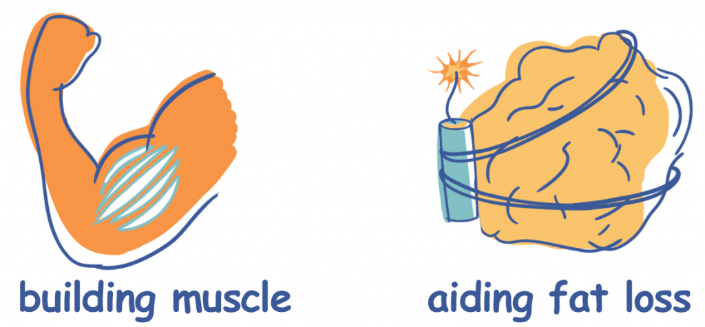 Building Muscle vs. Aiding Fat Loss