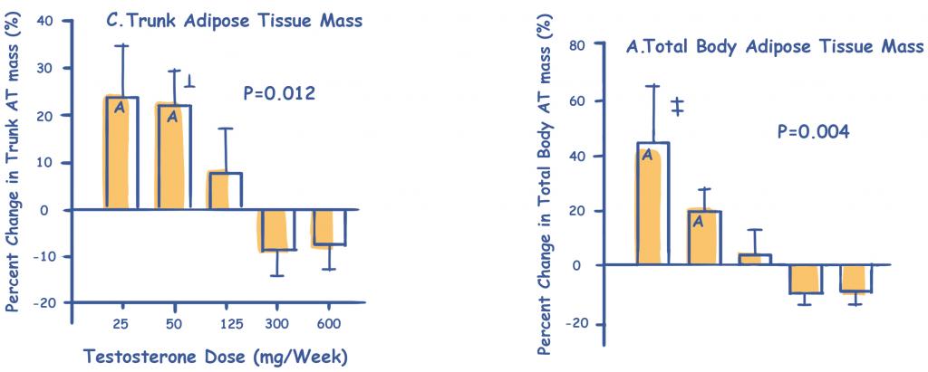 Testosterone Levels Effect on Body Fat